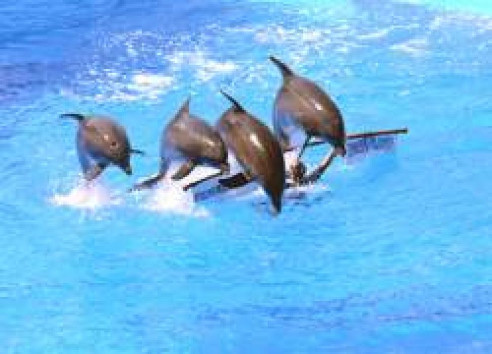 marineland chat Day trip: marineland dolphin adventure one of the most popular excursions on many caribbean vacations is the opportunity to swim with dolphins plantation bay residents are fortunate to have that same opportunity available right in their own back yard.